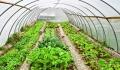 فرایند صدور مجوزهای تولیدی دربخش کشاورزی قم کوتاه شد