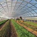 پنج میلیارد تومان اعتبار برای تأمین زیر ساختهای پنج شهرک کشاورزی
