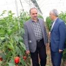 توسعه کشت گلخانهای تنها راهکار افزایش راندمان تولیدات کشاورزی در شهرستان مرند
