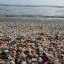تصاویر صدف های دریایی جاذبه دیدنی سواحل آستارا