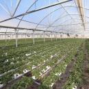 اراضی تحت کشت ارگانیک کشور به ۳۰۰ هزار هکتار افزایش مییابد